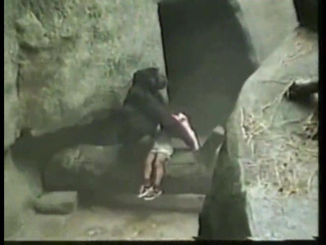 gorillaboy1