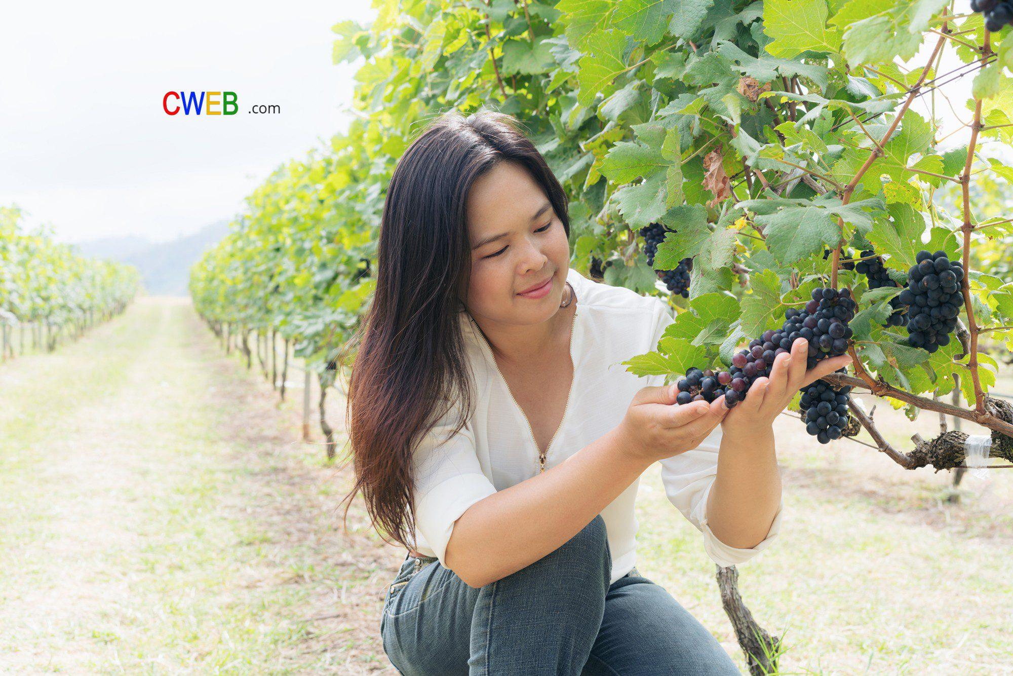 chinese-wine-investment-1