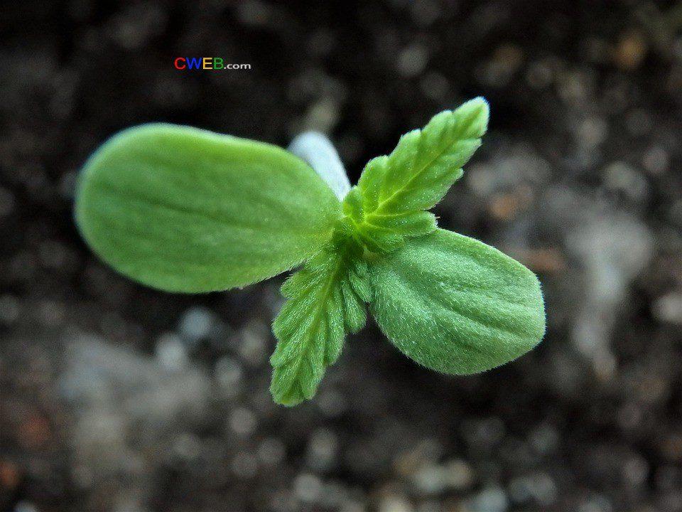 flora-3158434_960_720